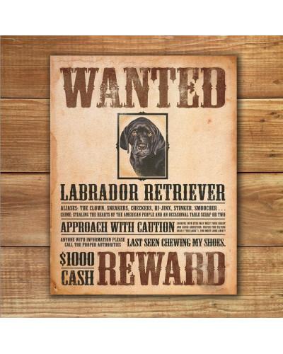 Plechová cedule Black Lab - Wanted Poster 32 cm x 40 cm w